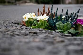ストリートアートプロジェクト・Pothole Project