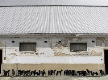 子羊の群れ (photo by: neozoon.org)