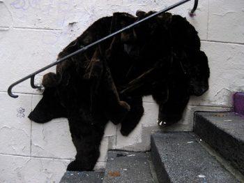 ファーの熊さん (photo by: neozoon.org)
